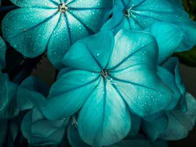 The Colour Turquoise